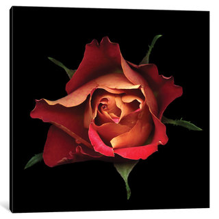 iCanvas The Kiss Of A Rose by Magda Indigo Canvas Print