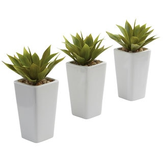 Mini Agave and White Planter Set (Set of 3)
